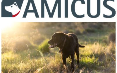 Amicus Newsletter
